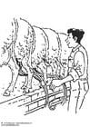 Malvorlage  Schafe melken