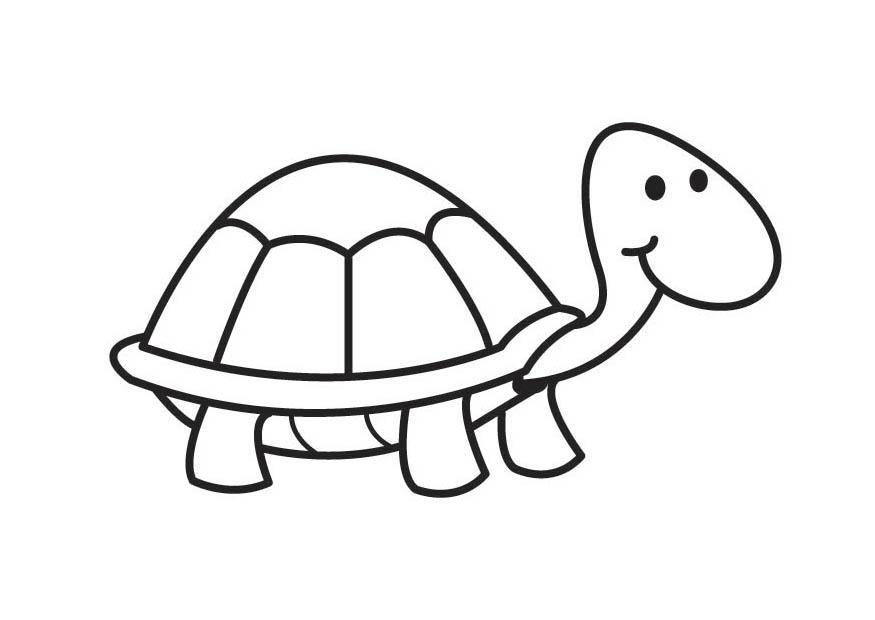 Malvorlage Schildkröte Ausmalbild 17592