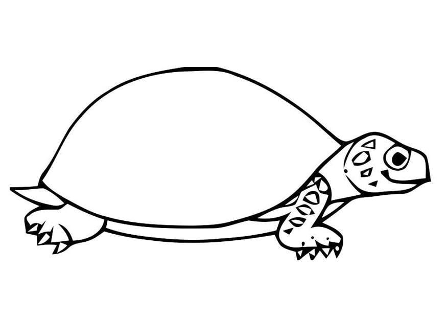 malvorlage schildkröte  kostenlose ausmalbilder zum