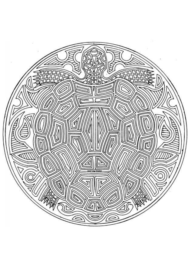 malvorlage schildkröte  ausmalbild 4545