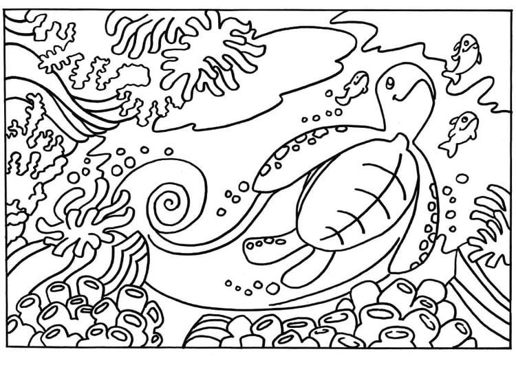 Malvorlage Schildkröte | Ausmalbild 18663.