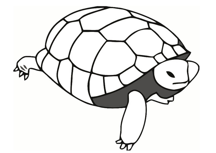 Malvorlage Schildkröte Ausmalbild 19638