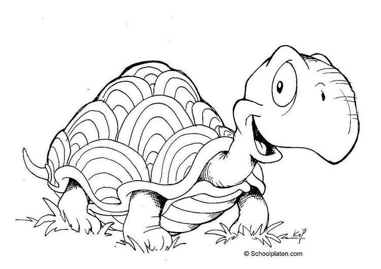 Malvorlage Schildkröte | Ausmalbild 2883.