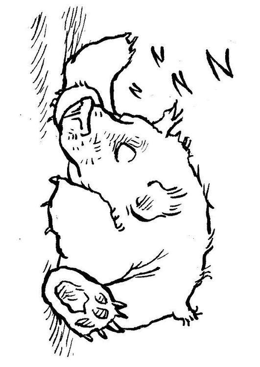 Malvorlage Schlafender Bär Ausmalbild 7580