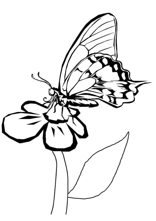 Ausmalbilder Schmetterling Mit Blume - trzykonie.top