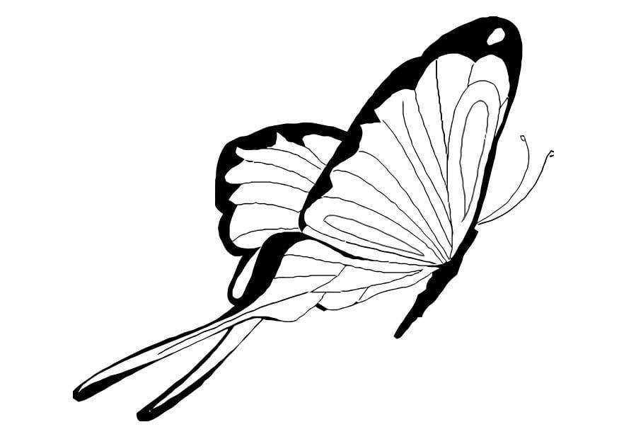 Malvorlage Schmetterling Ausmalbild