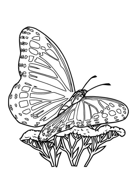 Malvorlage Schmetterling | Ausmalbild 10920.