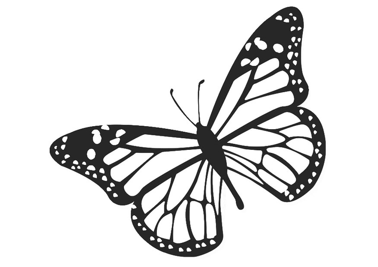 Malvorlage Schmetterling | Ausmalbild 20674.