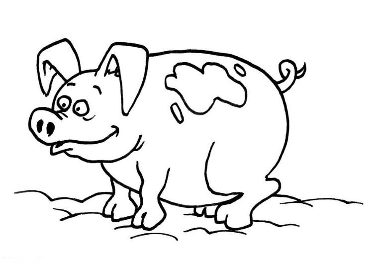 Malvorlage Schwein | Ausmalbild 10377.