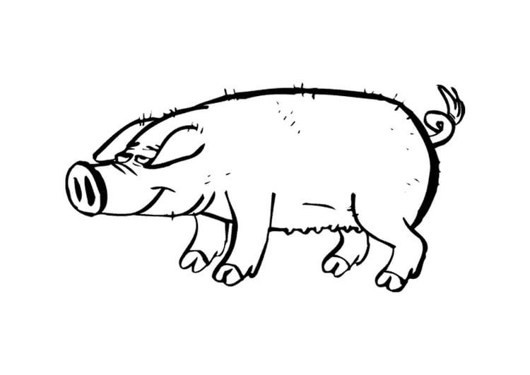 Malvorlage Schwein | Ausmalbild 9697.