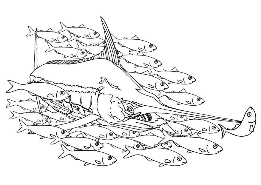 Malvorlage Schwertfisch in Fischschule | Ausmalbild 9483.