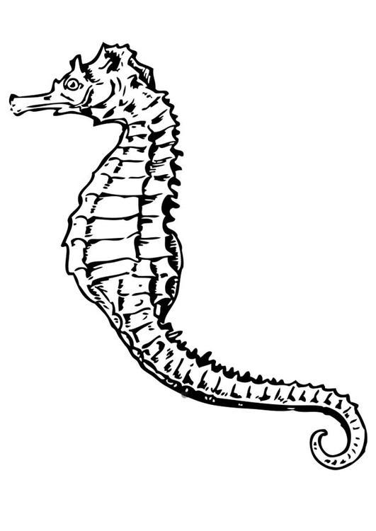 Malvorlage seepferdchen ausmalbild 17415 for Cavalluccio marino disegno
