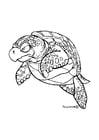 Malvorlage  Seeschildkröte