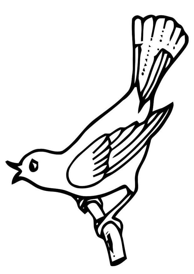 Malvorlage singender Vogel | Ausmalbild 19461.