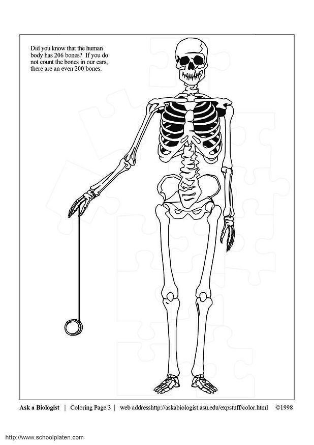 Erfreut Skelettsystem Malvorlagen Galerie - Ideen färben - blsbooks.com