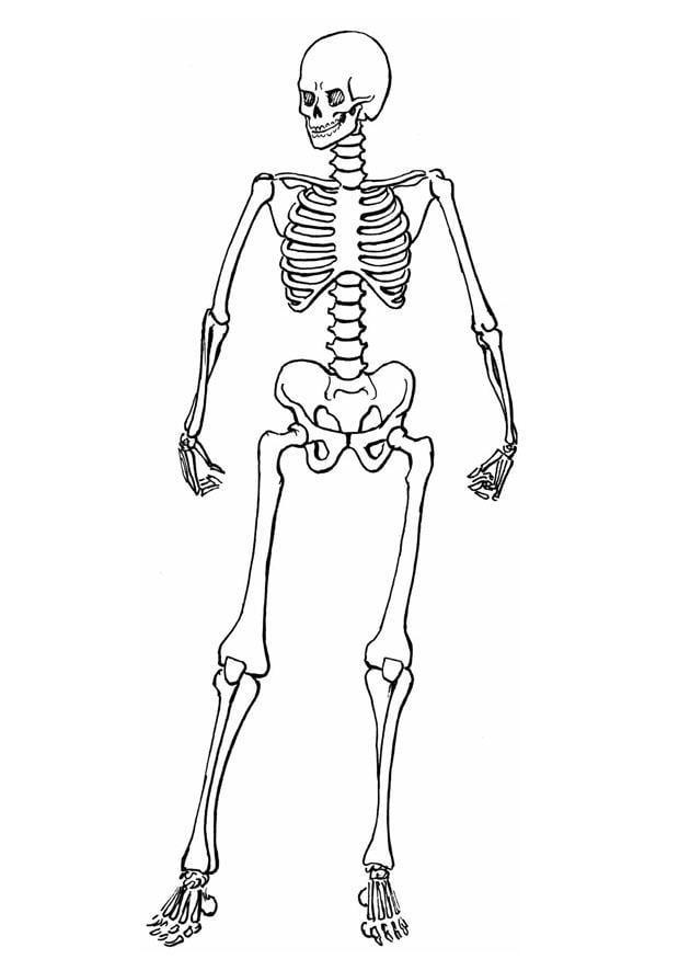 Malvorlage Skelett | Ausmalbild 8910.