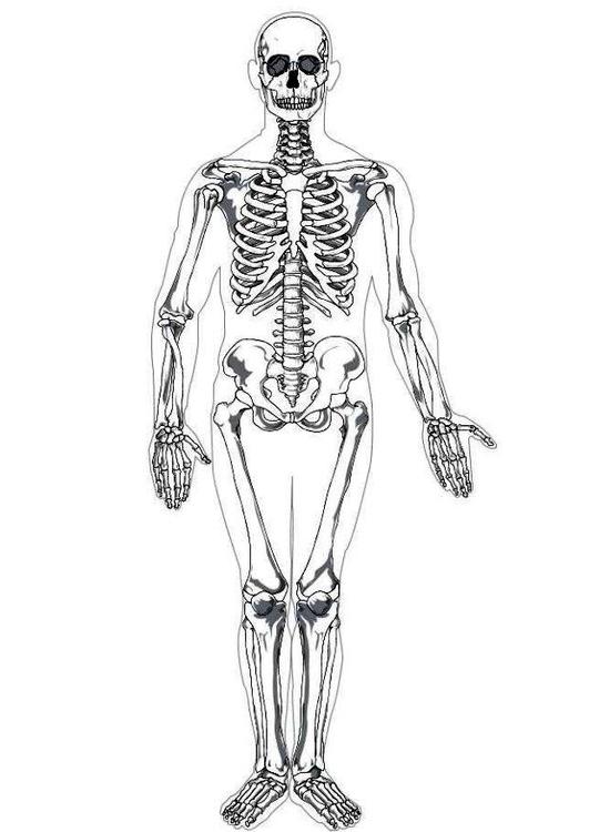 ausmalbild mensch körper  kinder ausmalbilder