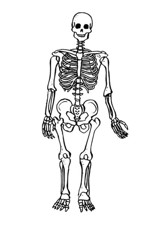 Malvorlage Skelett Kostenlose Ausmalbilder Zum Ausdrucken