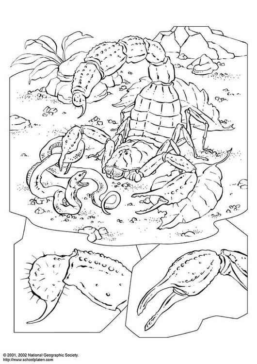 Malvorlage Skorpion Kostenlose Ausmalbilder Zum Ausdrucken