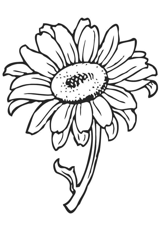 malvorlage sonnenblume  kostenlose ausmalbilder zum