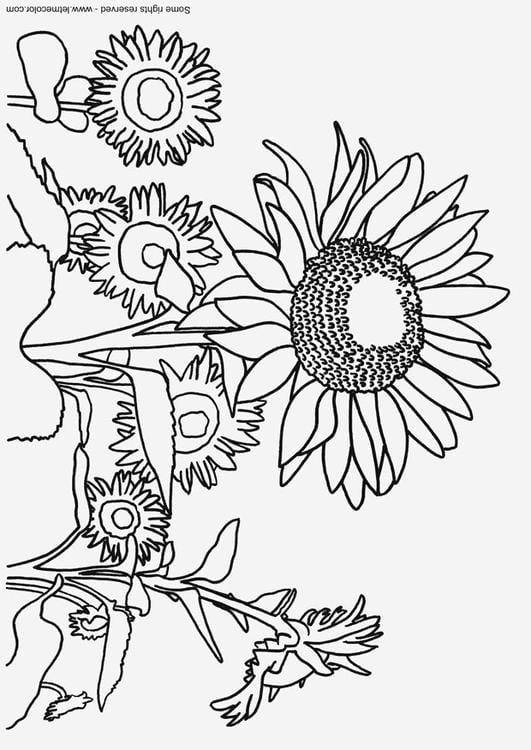 Malvorlage Sonnenblume Ausmalbild 9791 Images