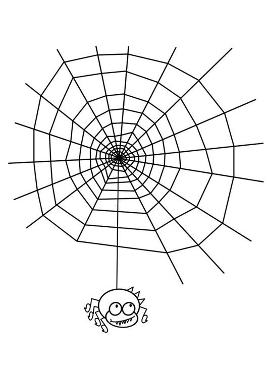 Malvorlage Spinnennetz mit Spinne | Ausmalbild 19058.