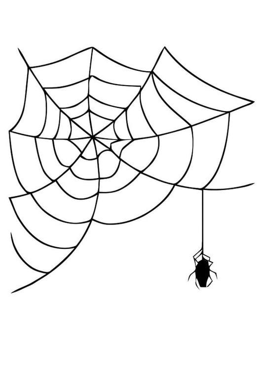 Malvorlage Spinnennetz mit Spinne   Ausmalbild 19625.