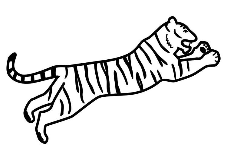 malvorlage springender tiger  kostenlose ausmalbilder zum