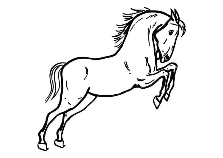Malvorlage springendes Pferd | Ausmalbild 10362.