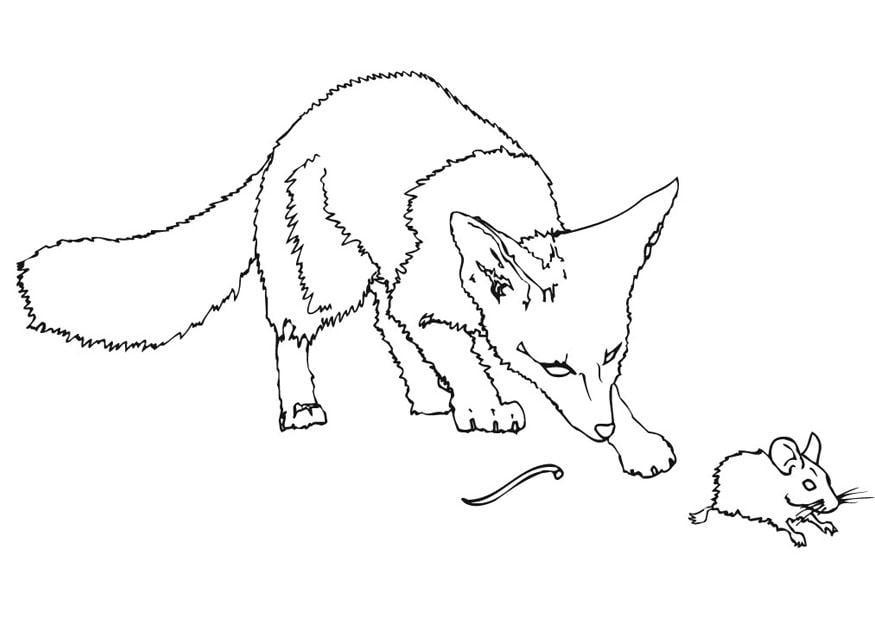 Malvorlage stachelmaus verliert ihren schwanz ausmalbild for Disegni di zorro da colorare per bambini
