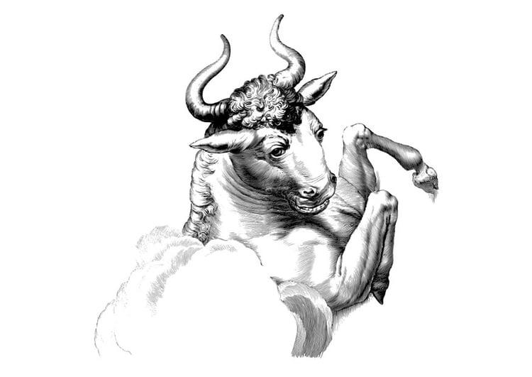 malvorlage stier  ausmalbild 27350