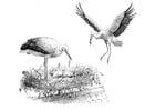 Malvorlage  Storch auf dem Nest