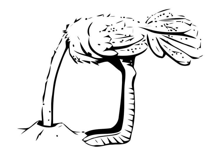 Malvorlage Strauss steckt den Kopf in den Sand   Ausmalbild 19630.
