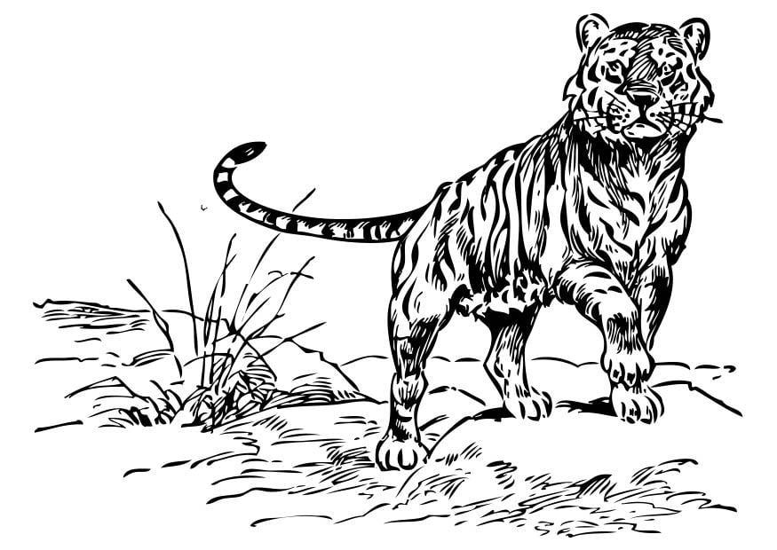 malvorlage tiger | ausmalbild 17378.