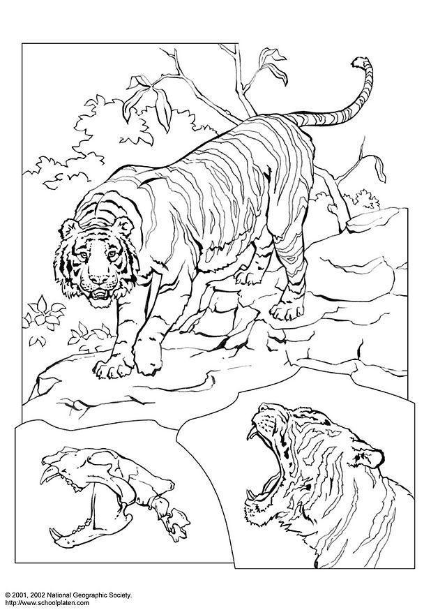 Kleurplaten Wilde Dieren Afrika Malvorlage Tiger Ausmalbild 3078