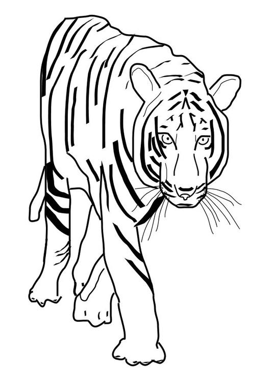Malvorlage Tiger   Ausmalbild 10101.