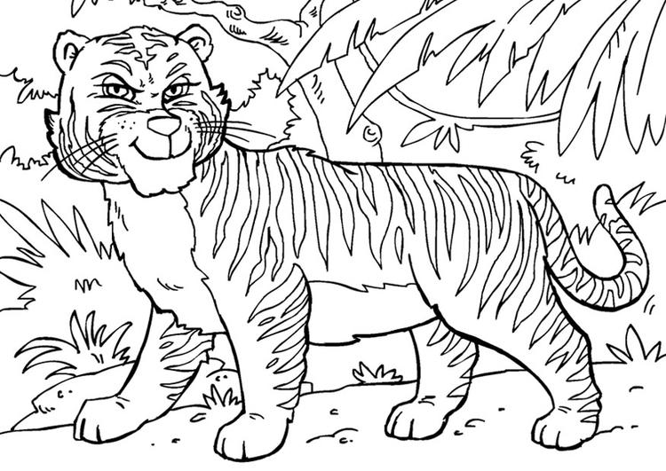 Malvorlage Tiger Kostenlose Ausmalbilder Zum Ausdrucken