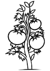 Malvorlage  Tomatenpflanze