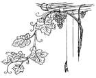 Malvorlage  Traubenranke