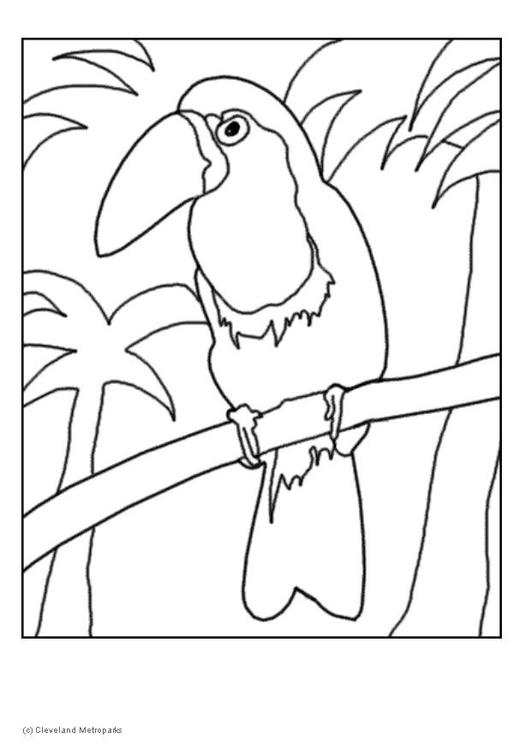 malvorlage tukan  kostenlose ausmalbilder zum ausdrucken