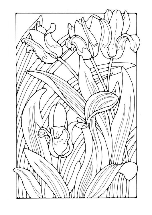 malvorlage tulpen  kostenlose ausmalbilder zum ausdrucken