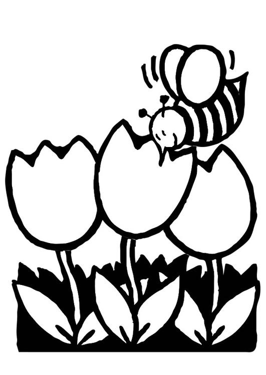 malvorlage tulpen mit biene  kostenlose ausmalbilder zum