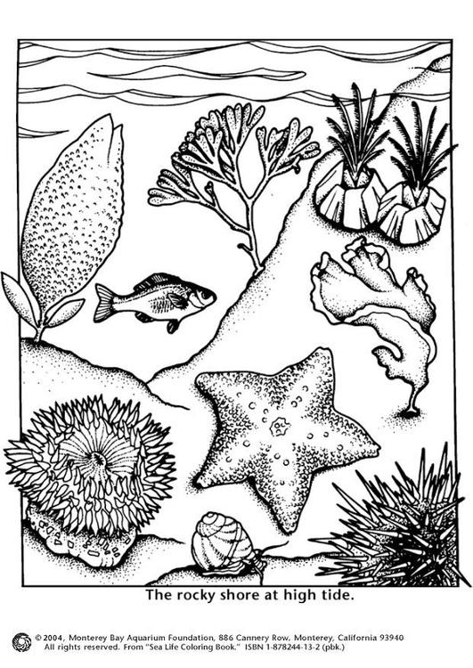 Malvorlage unterwasserleben - flut | Ausmalbild 4356.