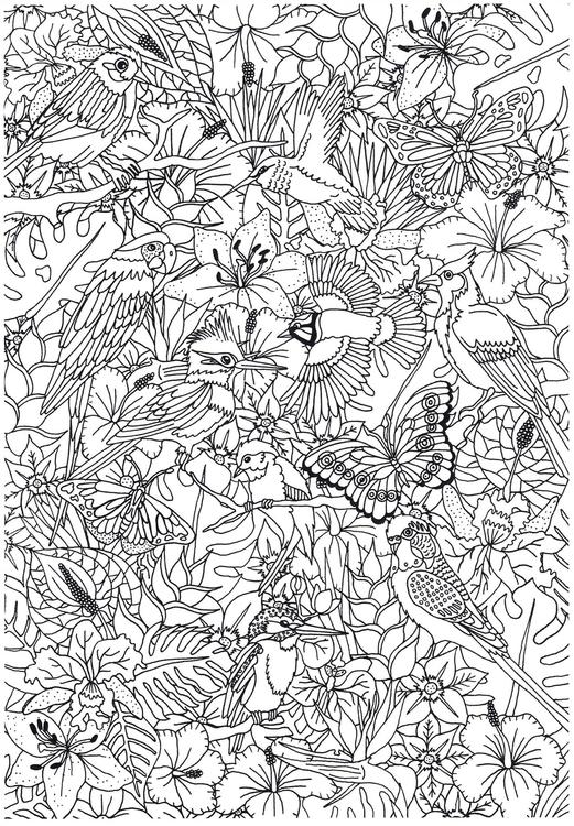 232 malvorlagen von vögel  kostenlose ausmalbilder zum