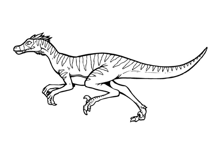 malvorlage velociraptor  ausmalbild 9376