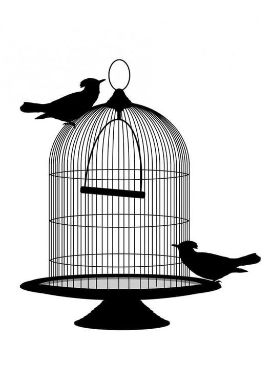 vogel bild ausmalbild vogel im kafig
