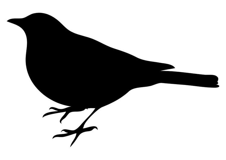 malvorlage vögel  kostenlose ausmalbilder zum ausdrucken