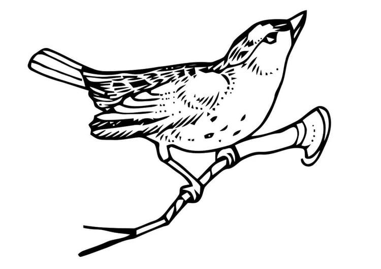 Malvorlage Vogel auf Zweig | Ausmalbild 20705.