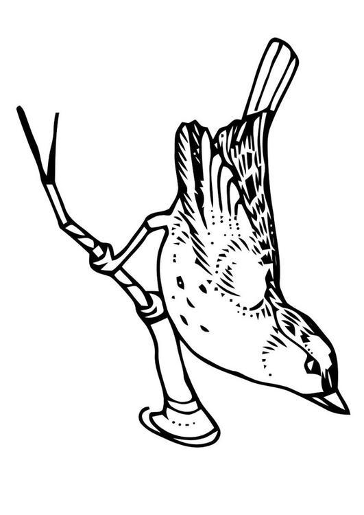 Vogeltje Kleurplaat Malvorlage Vogel Auf Zweig Ausmalbild 20705 Images