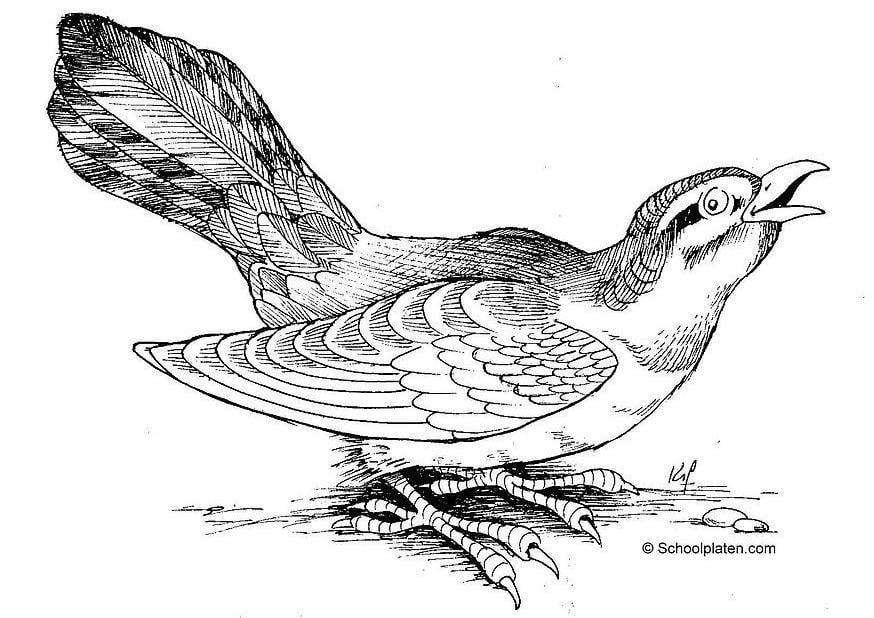Malvorlage Vogel | Ausmalbild 2886.